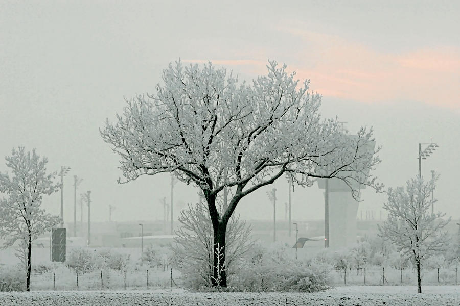 White Photograph - Eerie Days by Christine Till