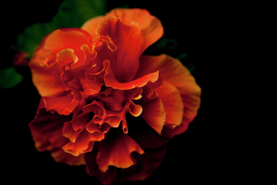Flower Photograph - Efflorescence by Eric Christopher Jackson