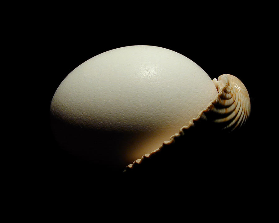 Egg Photograph - Egg - Shell by David April