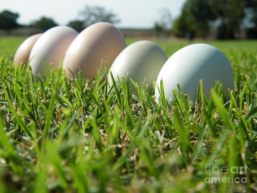 Egg 6 Photograph by Molly Zuhlke