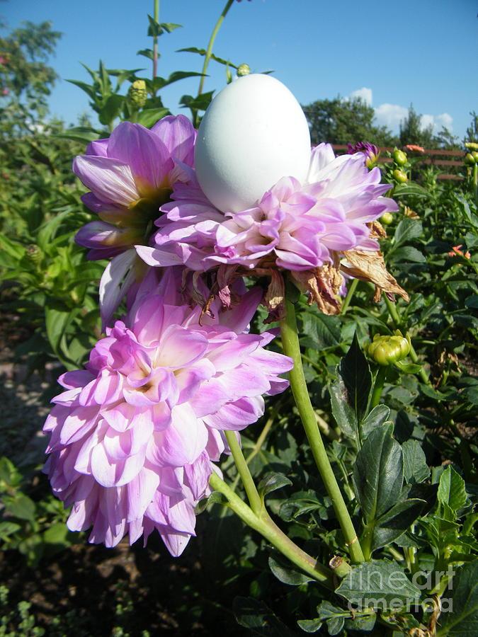 Egg 7 Photograph by Molly Zuhlke