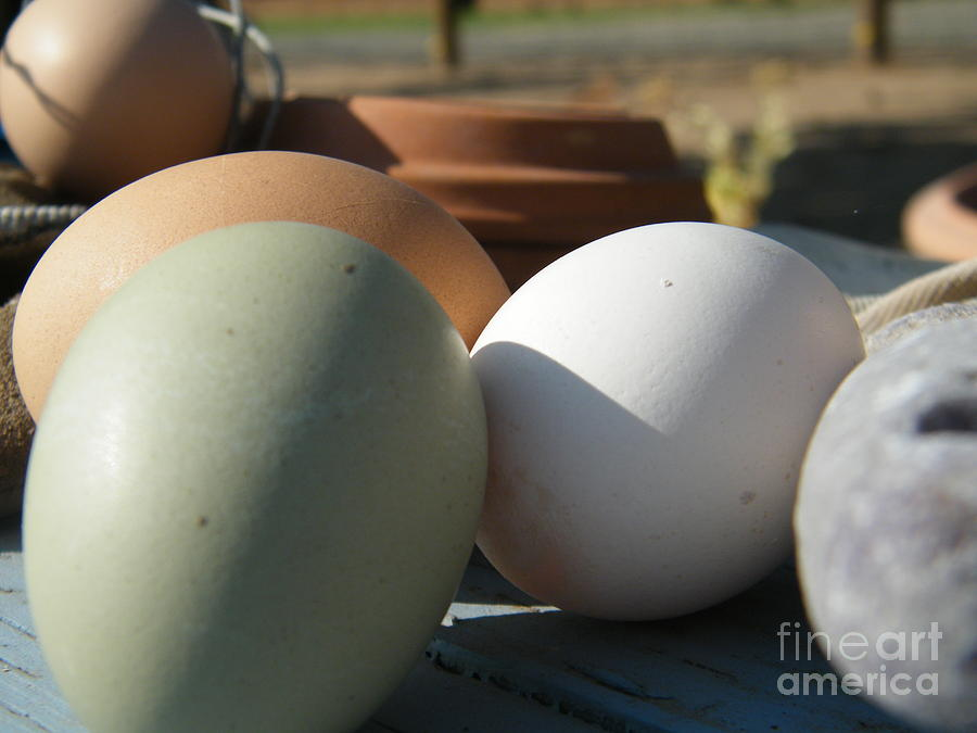 Egg 8 Photograph by Molly Zuhlke