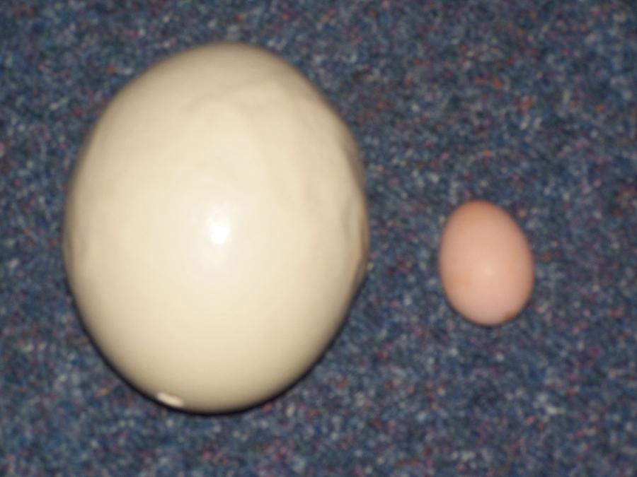 Eggs 3 Photograph by Jesse Gray