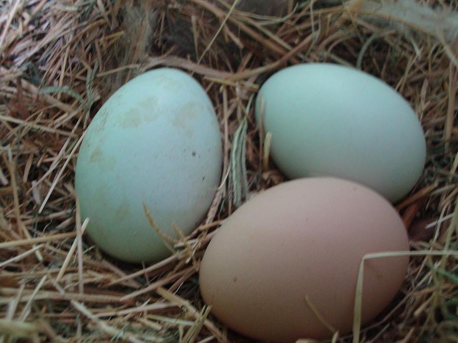 Eggs1 Photograph by Stephanie Huber