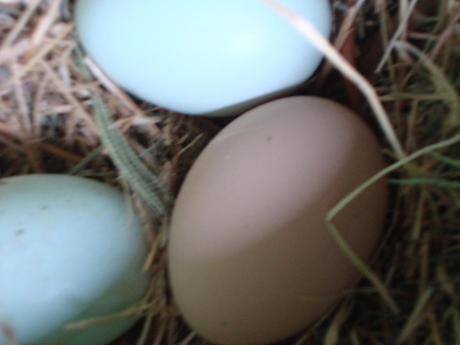 Eggs10 Photograph by Stephanie Huber