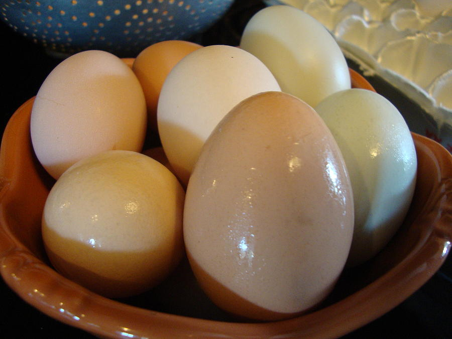 Eggs2 Photograph by Stephanie Huber