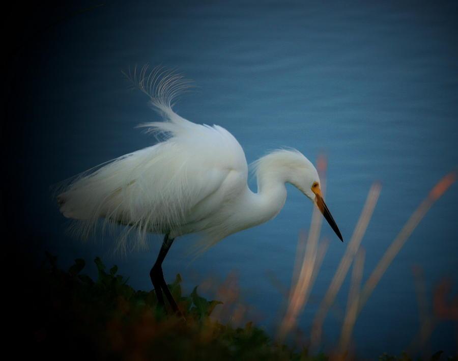 Egret At The Pond Photograph by Butch Ramirez