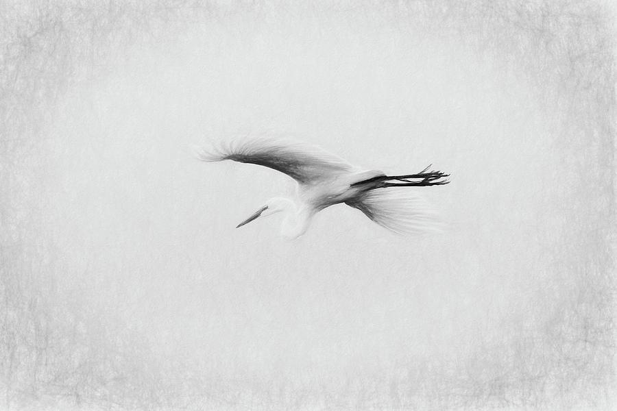Egret by Dawn J Benko