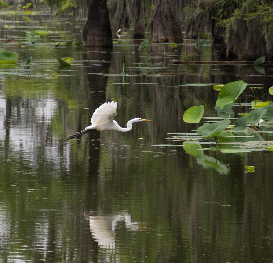 Egret In Flight  by MaryAnn Barry