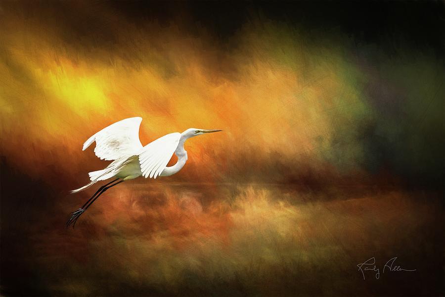 Egret in Flight by Randall Allen