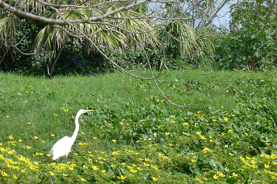 Egret Photograph - Egret In Flowers by Geralyn Palmer