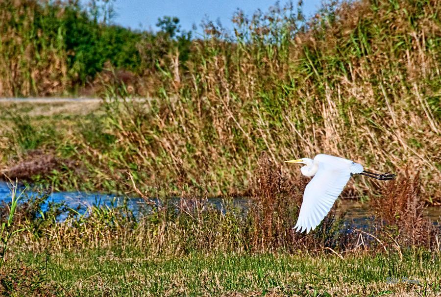 Marsh Photograph - Egret In The Marsh by Bill Perry