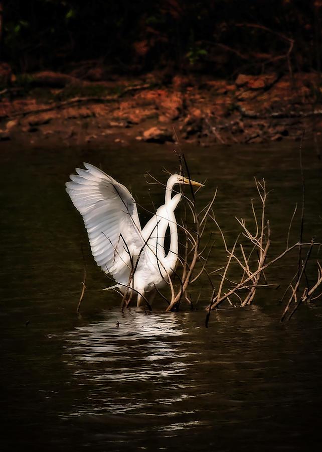 Egrets Photograph - Egret Ix by Gary Adkins