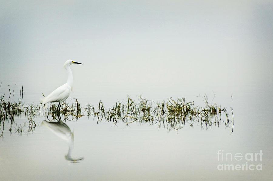 Egret Photograph - Egret by Jim  Calarese