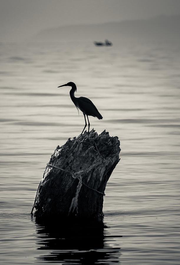 Birds Photograph - Egret Silhouette by Dane Strom