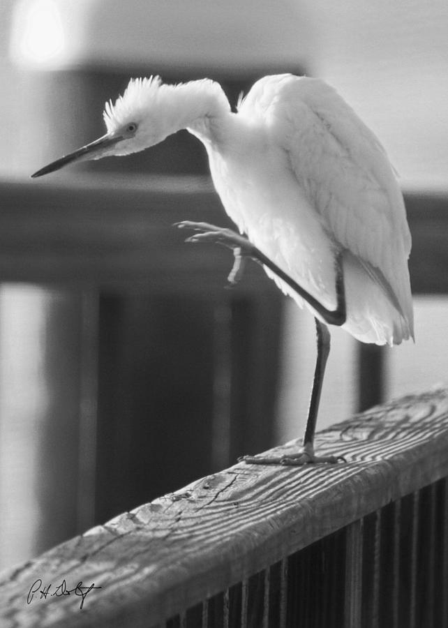 Birds Photograph - Egret Tai Chi by Phill Doherty