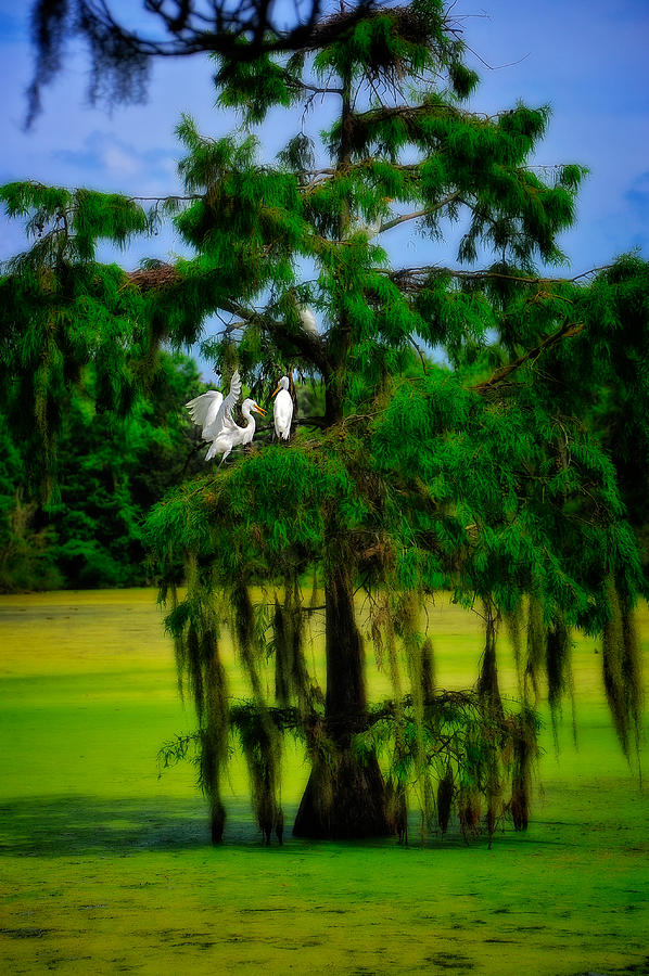 Egret Tree by Harry Spitz