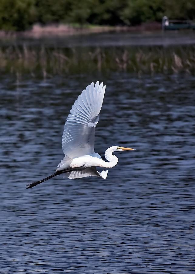 Egrets Photograph - Egret Vi by Gary Adkins