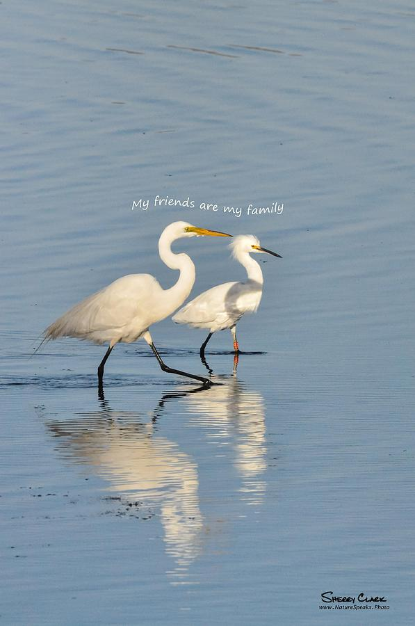 Egrets say My Friends are My Family Photograph by Sherry Clark