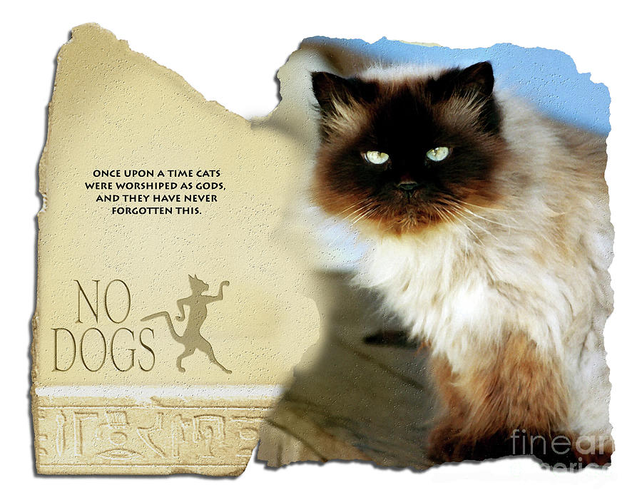 Cat Digital Art - Ancient Cattitude by Rose De Dan