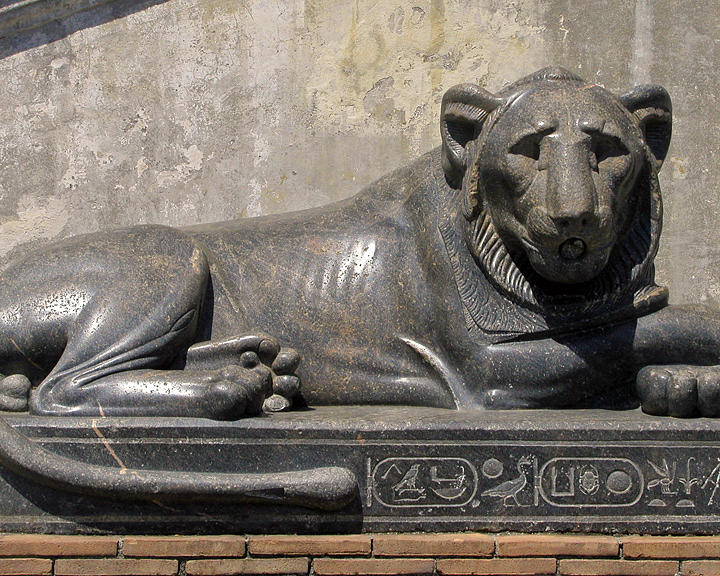 Lion Photograph - Egyptian Lion by Jean Hall