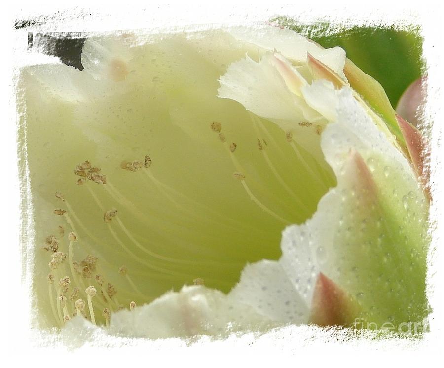 Cactus Photograph - Eileen by Priscilla Richardson