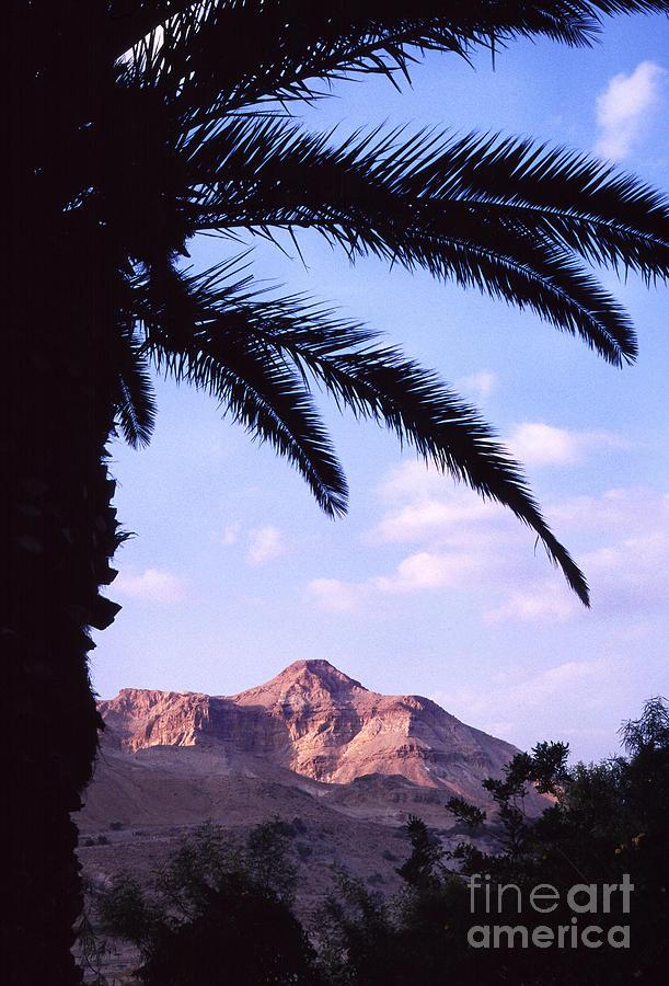 Date Palm Photograph - Ein Gedi Oasis by Thomas R Fletcher