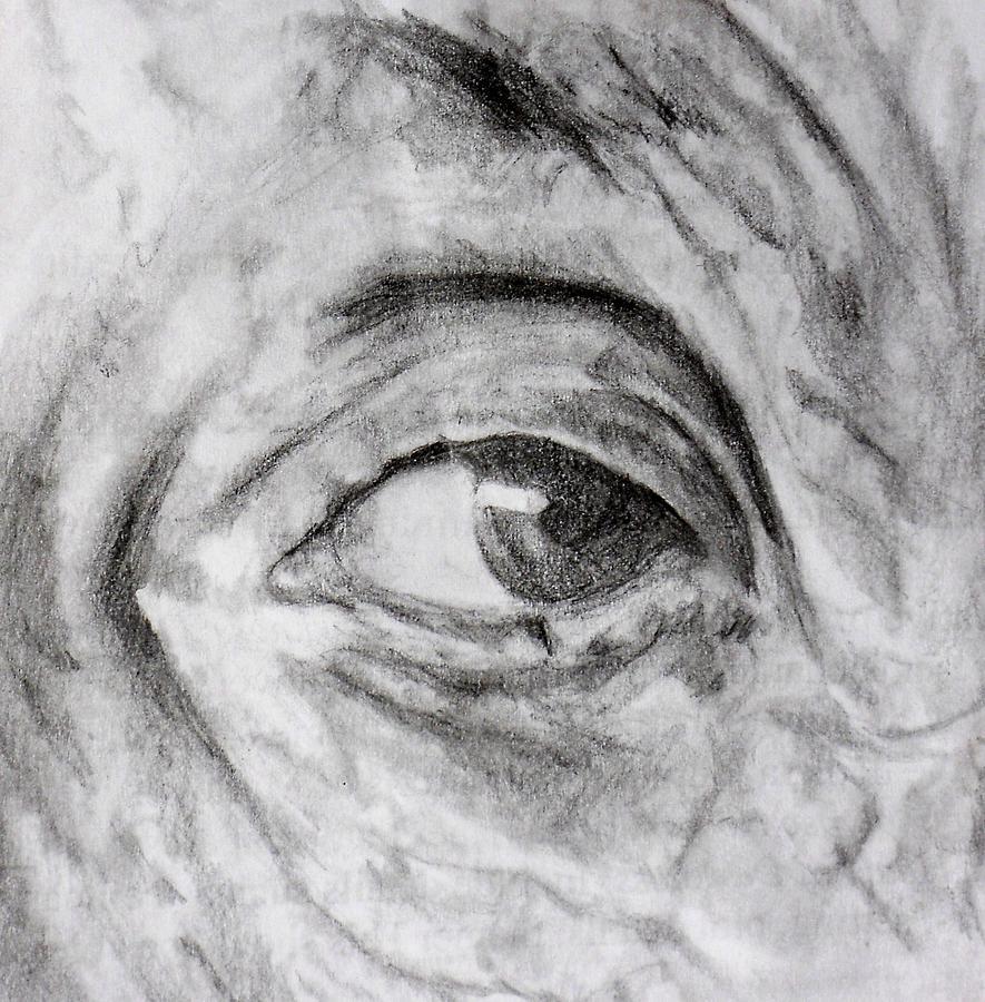 Einsteins Eye Photograph by K Ramsey