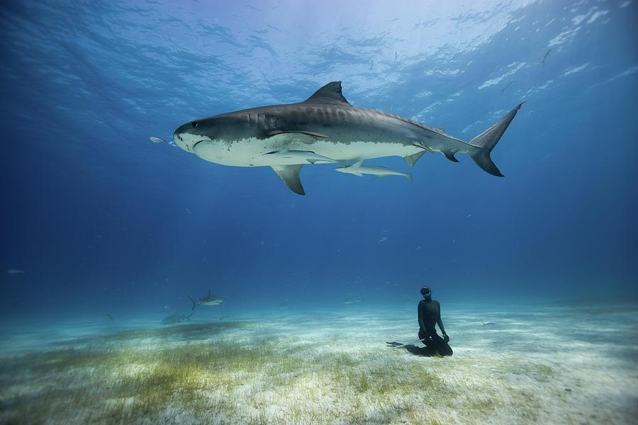 Freediving Photograph - El Tigre by One ocean One breath