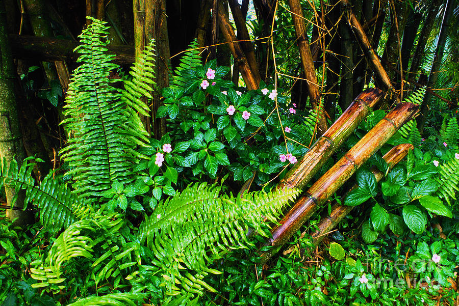 Puerto Rico Photograph - El Yunque National Forest Ferns Impatiens Bamboo Mirror Image by Thomas R Fletcher