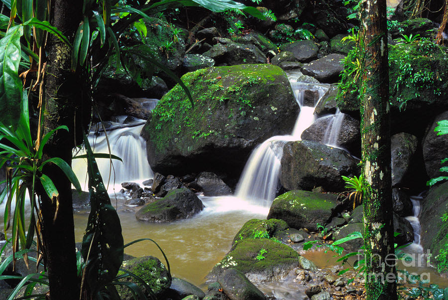 Puerto Rico Photograph - El Yunque National Forest Waterfall by Thomas R Fletcher