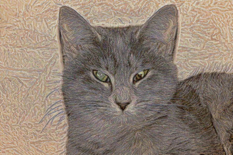 Cat Photograph - Elby by David Yocum