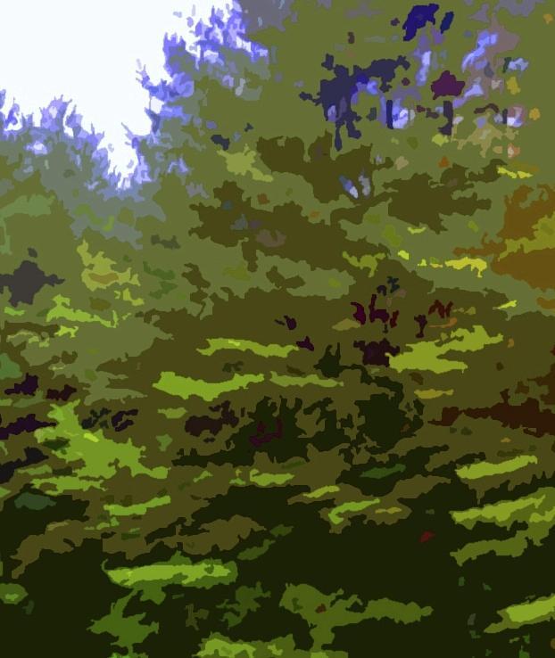 Elder Pines by T Byron K