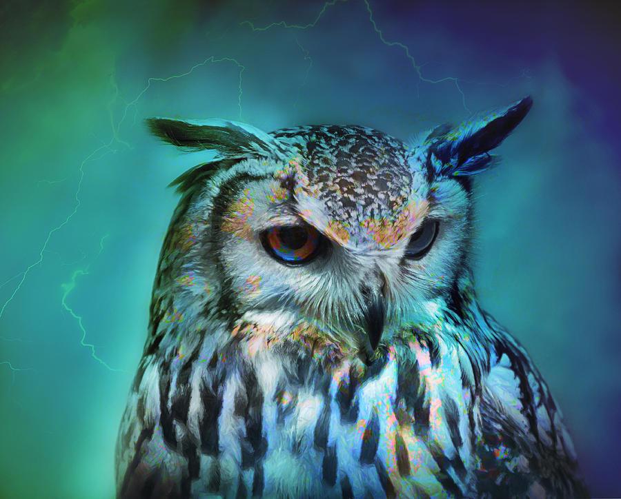 Electric Owl Photograph