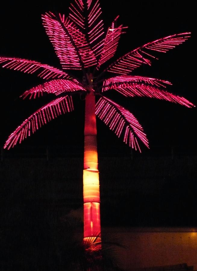 Abstract Photograph - Electric Palm by Florene Welebny