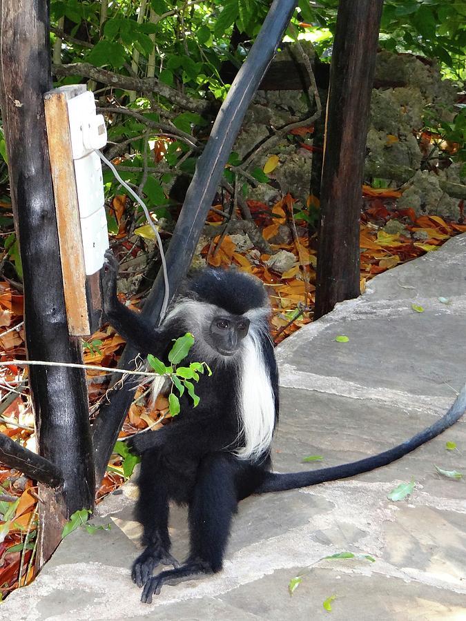 Unschooling Photograph - Electrical work - monkey power by Exploramum Exploramum