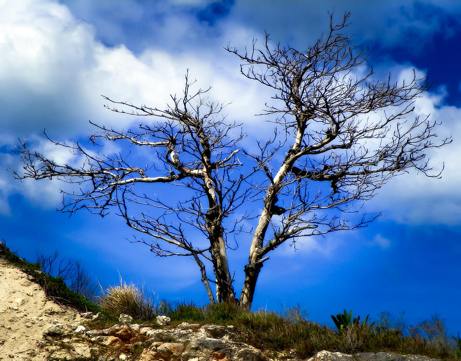 Solitude Tree Photograph - Elegance Of Time  by Karen Wiles