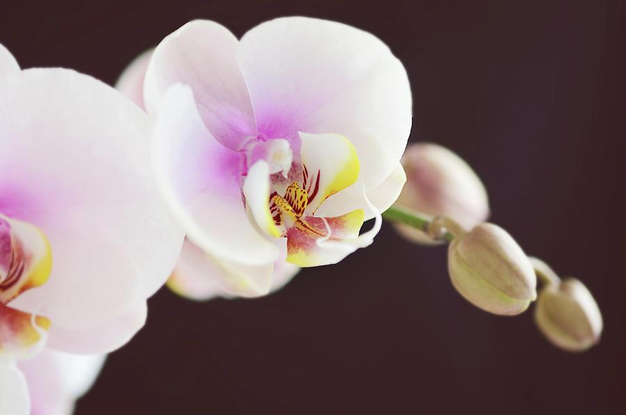 Horizontal Photograph - Elegant Beauty by Dhmig Photography