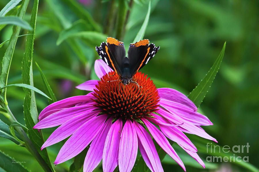 Elegant Butterfly by Ms Judi