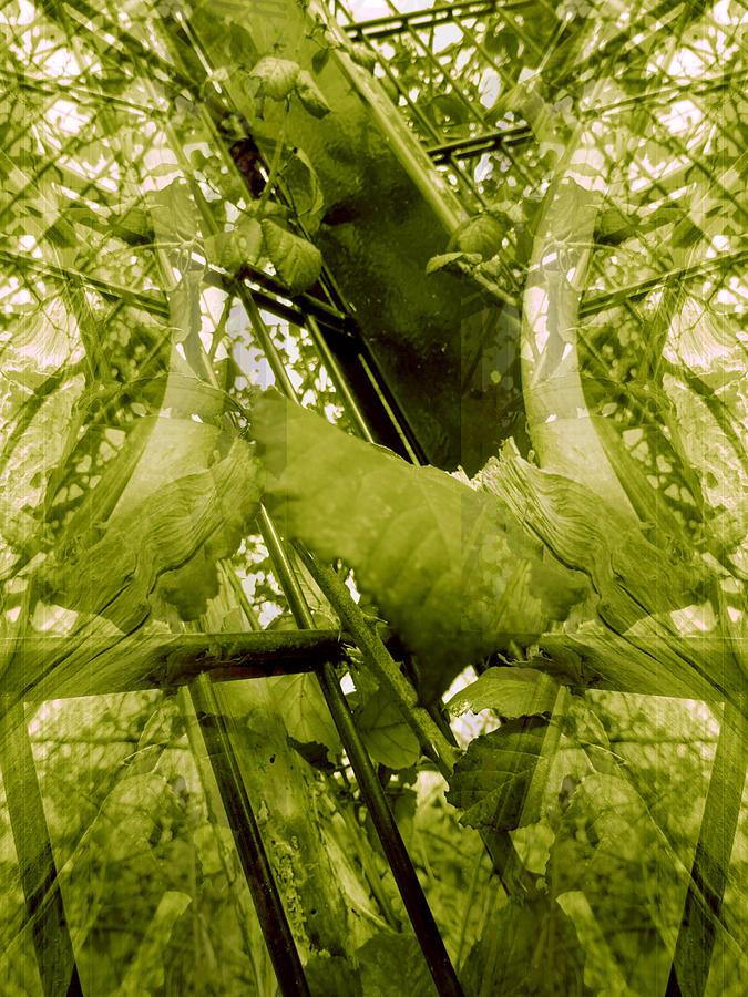 Elements 154 Photograph