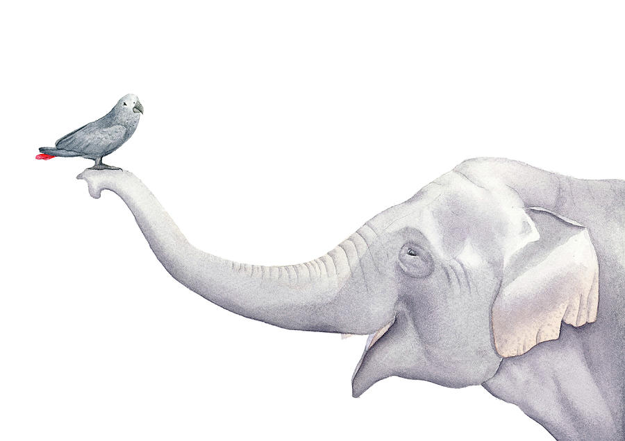 Elephant And Bird Watercolor Painting