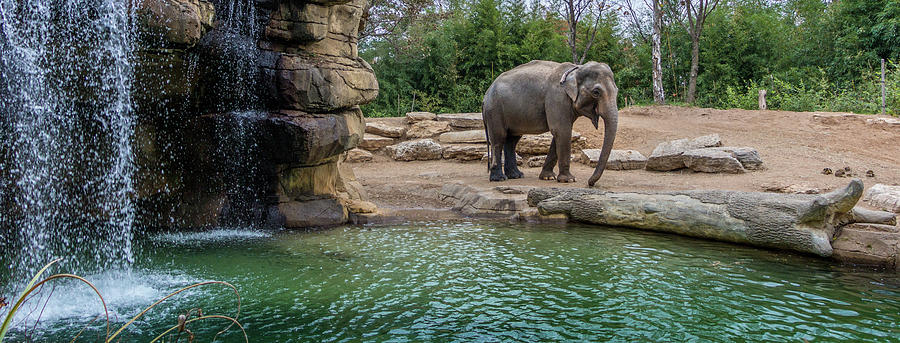 Elephant Photograph - Elephant And Waterfall by Steven Jones