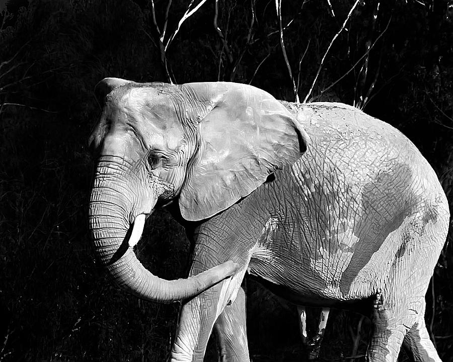 Elephant Photograph - Elephant by Camille Lopez