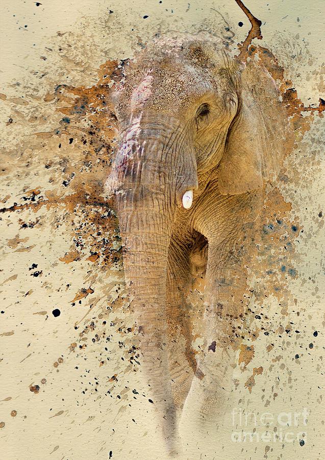 Elephant Photograph - Elephant Color Splash by Pam  Holdsworth