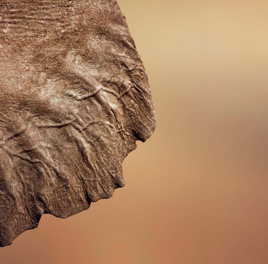 Texture Photograph - Elephant Ear Close-up by Johan Swanepoel
