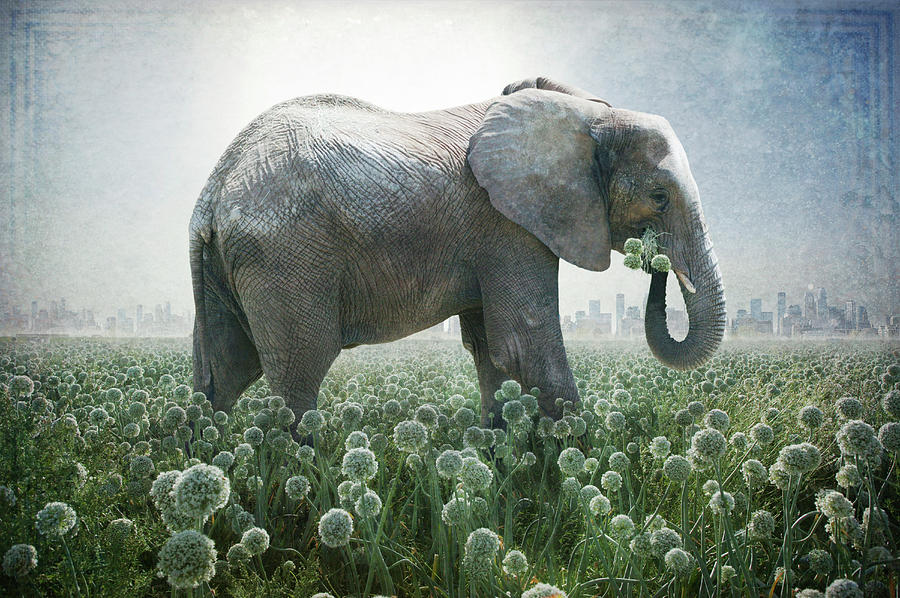 Elephant Photograph - Elephant Eating Onions by Guy Crittenden