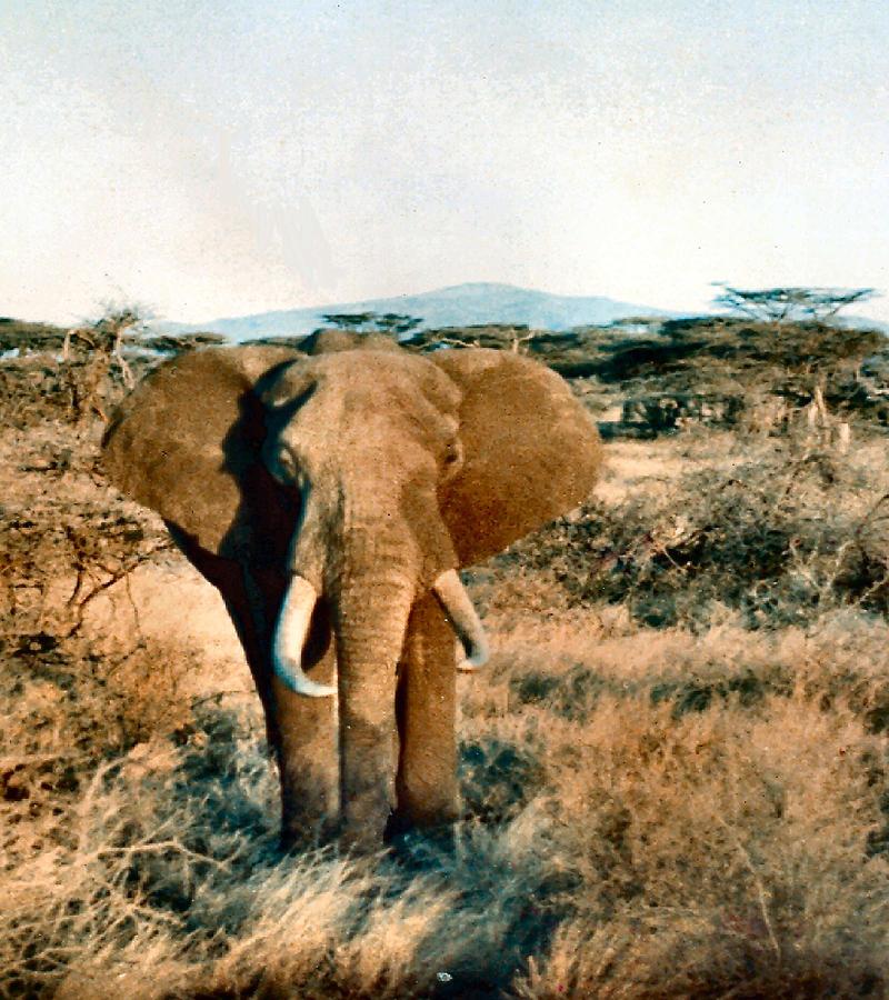 Elephant Eyes by Lin Grosvenor