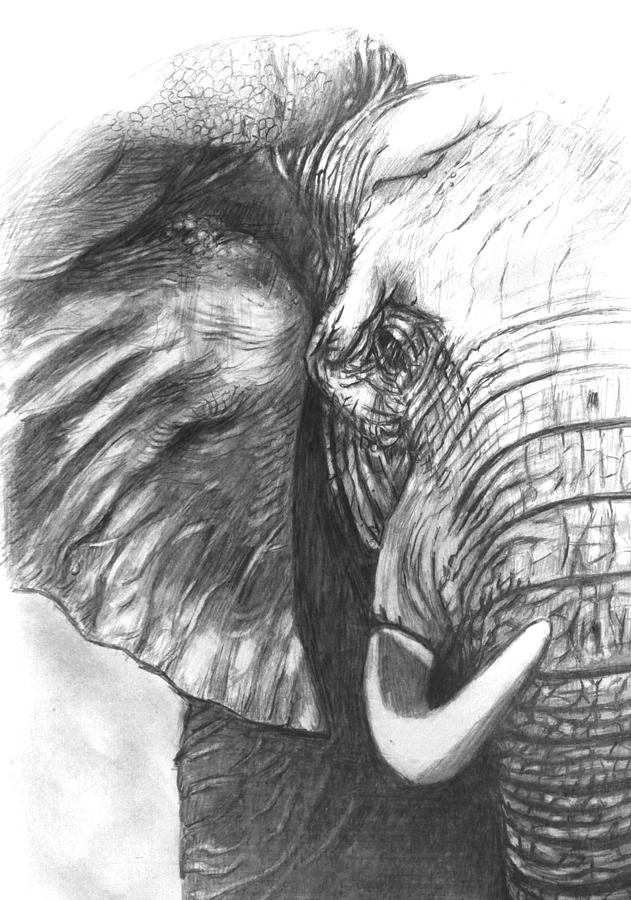Elephant pencil drawing drawing elephant for alabama by hae kim