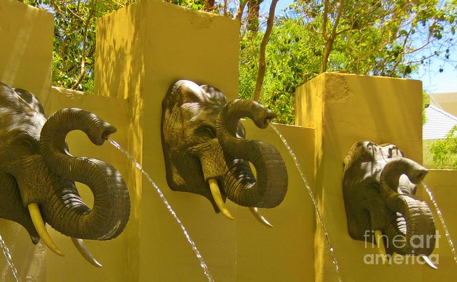 Elephants Photograph - Elephant Fountain One by John Malone