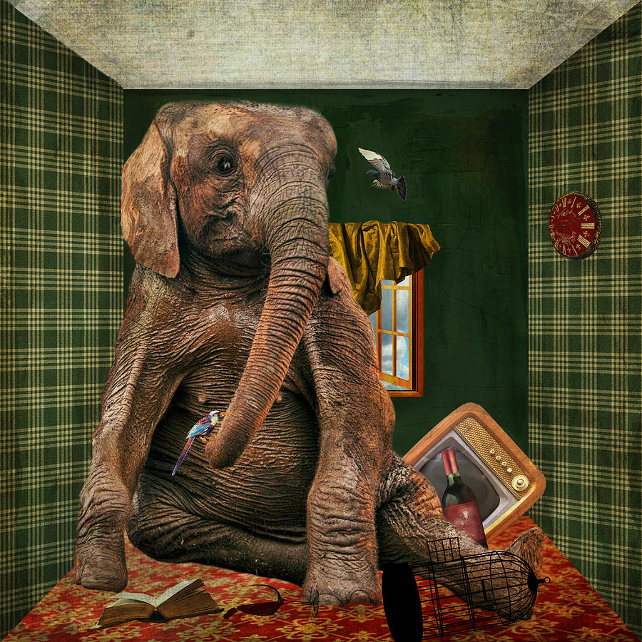 Elephant In The Room Digital Art By Terry Fleckney